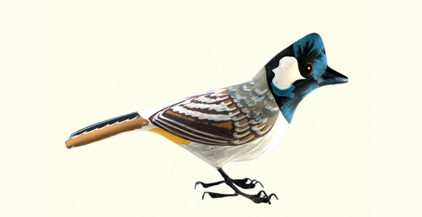 Some chirrups from wilderness ~ Bulbul
