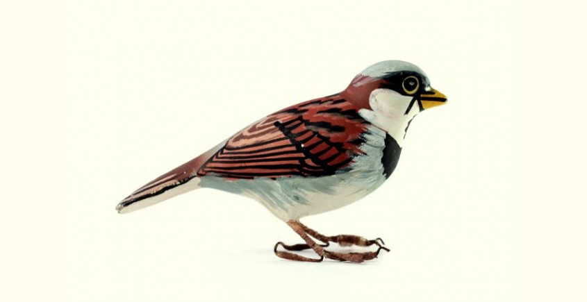 Some chirrups from wilderness ~ Sparrow