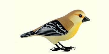 Some chirrups from wilderness ~ Weaver bird