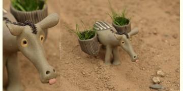 Dholu ~ A Donkey